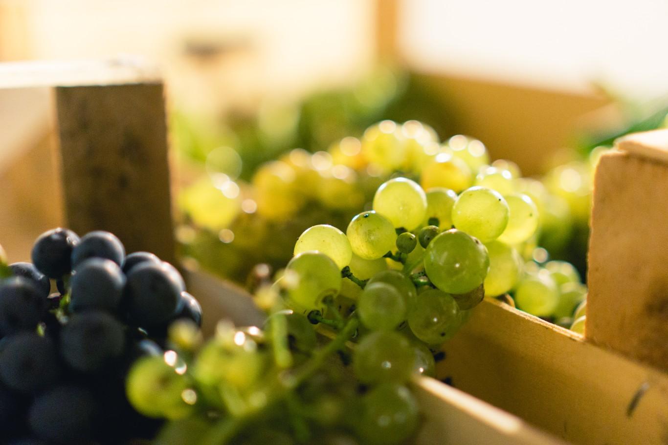 Corso Degustazione Vino Padova6