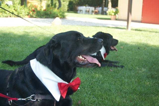 Una location per eventi dog Friendly a Padova?!