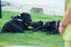 Casa Tormene Location Dog Friendly3