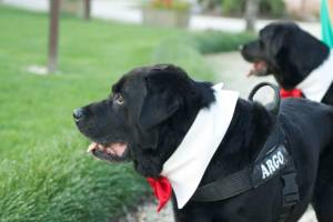 Casa Tormene Location Dog Friendly4
