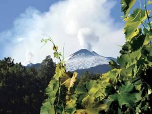 Degustazione vini vulcanici