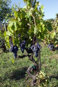Degustazioni vini a Casa Tormene - vini vulcanici