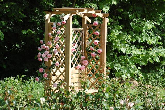 Rose A Padova Casa Tormene 0438