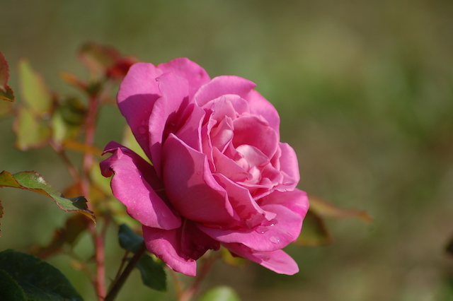 Rose A Padova Casa Tormene 0500